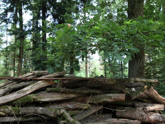 Over - Buitenplaats Elisabeth-tuin-natuur