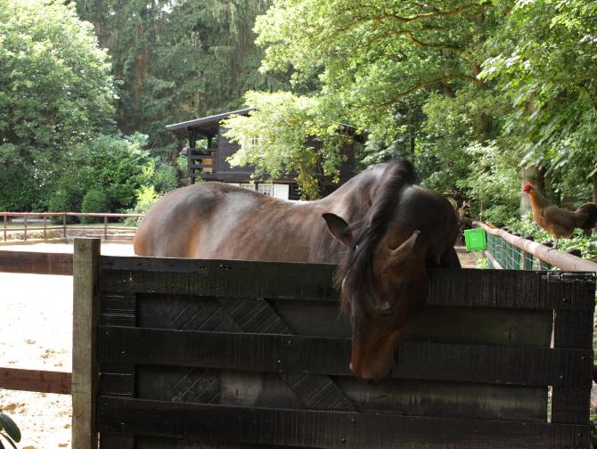 Over - Buitenplaats Elisabeth-paard
